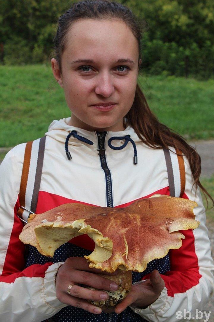 Пять тонн грибов собрали участники чемпионата под Полоцком. Фоторепортаж, фото-2