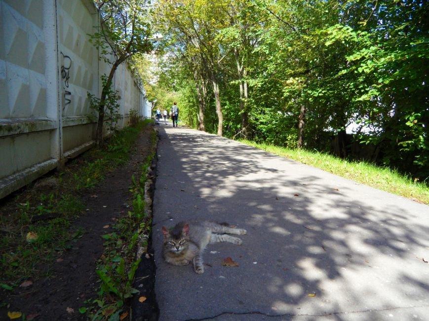 Заезд на 40 км продлят до Октябрьского проспекта в Троицке, фото-3