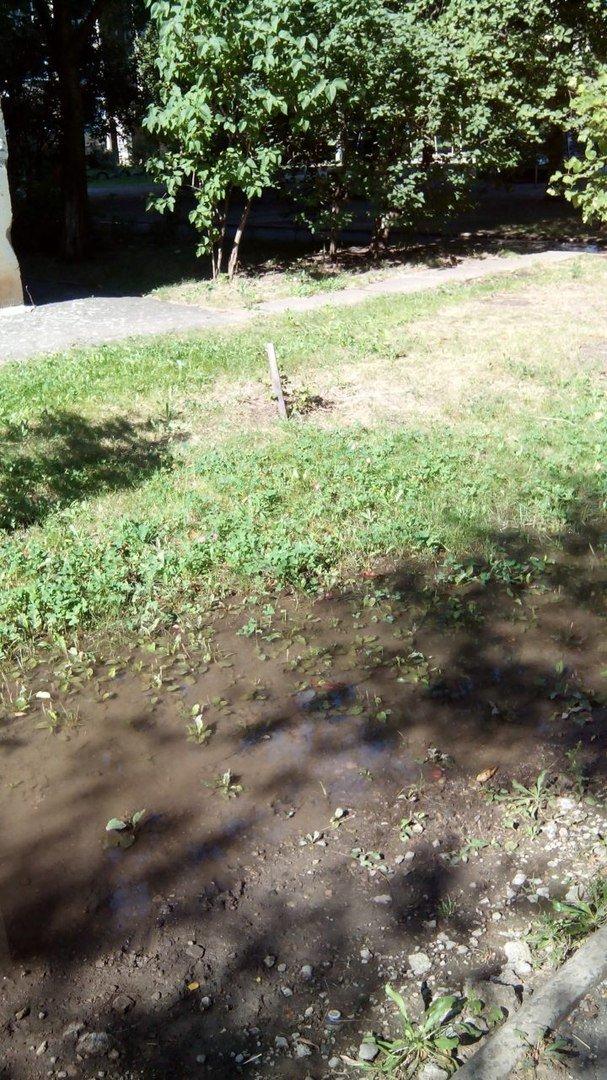 В Кривом Роге 2 недели питьевой водой поливается бурьян во дворе (ФОТО), фото-2