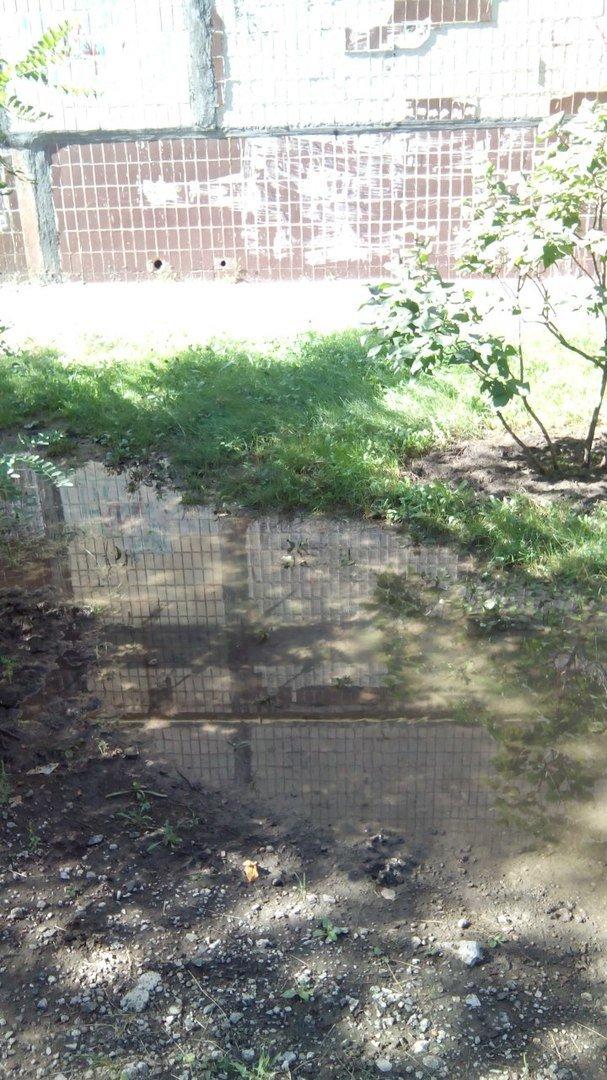 В Кривом Роге 2 недели питьевой водой поливается бурьян во дворе (ФОТО), фото-3