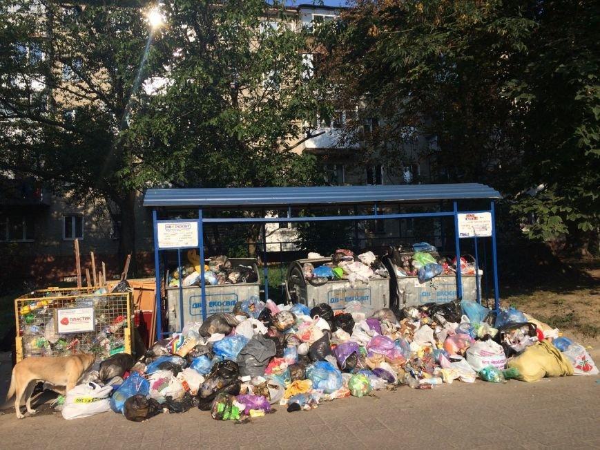 На вулиці Пасічній переповнені контейнери сміття (ФОТО), фото-1