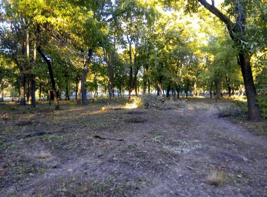В краматорском парке Пушкина происходит массовая вырубка деревьев, фото-1