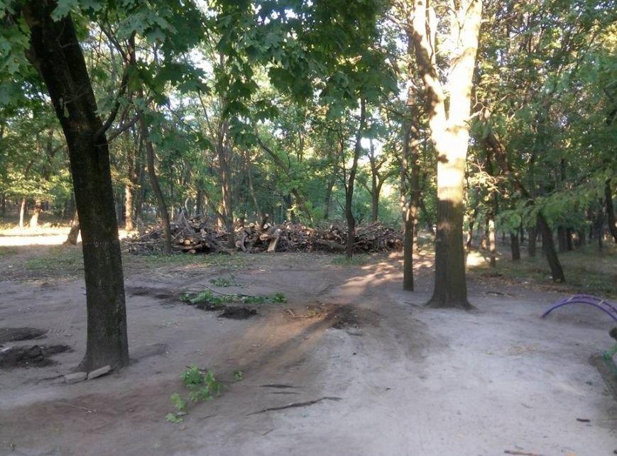В краматорском парке Пушкина происходит массовая вырубка деревьев, фото-2