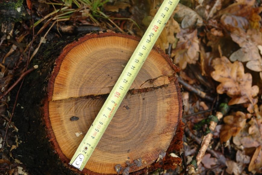 Жителі Богородчанщини повстали проти масштабної вирубки молодого лісу (ФОТОРЕПОРТАЖ + ВІДЕО), фото-10