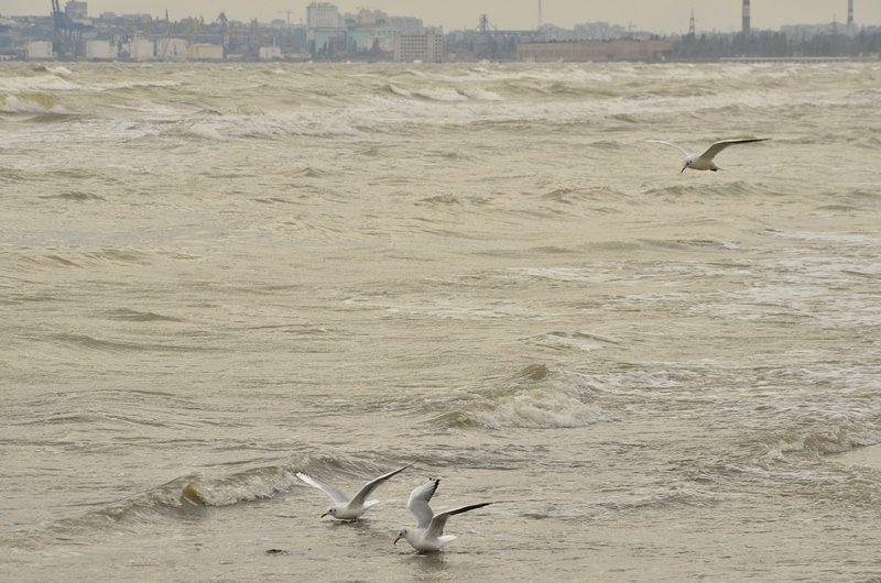 У берегов Одессы вспенилось море (ФОТО), фото-4
