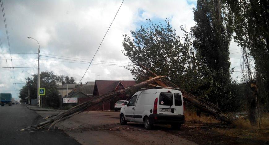 В Симферополе дерево упало на автомобиль и поломалось о крышу (ФОТОФАКТ), фото-1