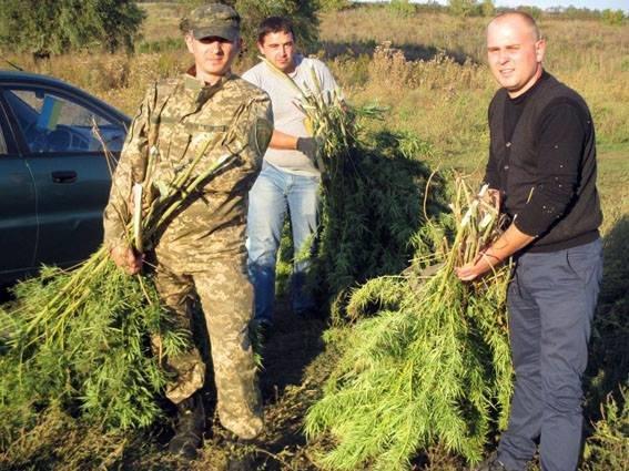 За последние сутки в Донецкой области уничтожено более 1200 кустов конопли, фото-3