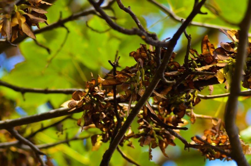 Осенние деревья в крымской столице (ФОТО), фото-14