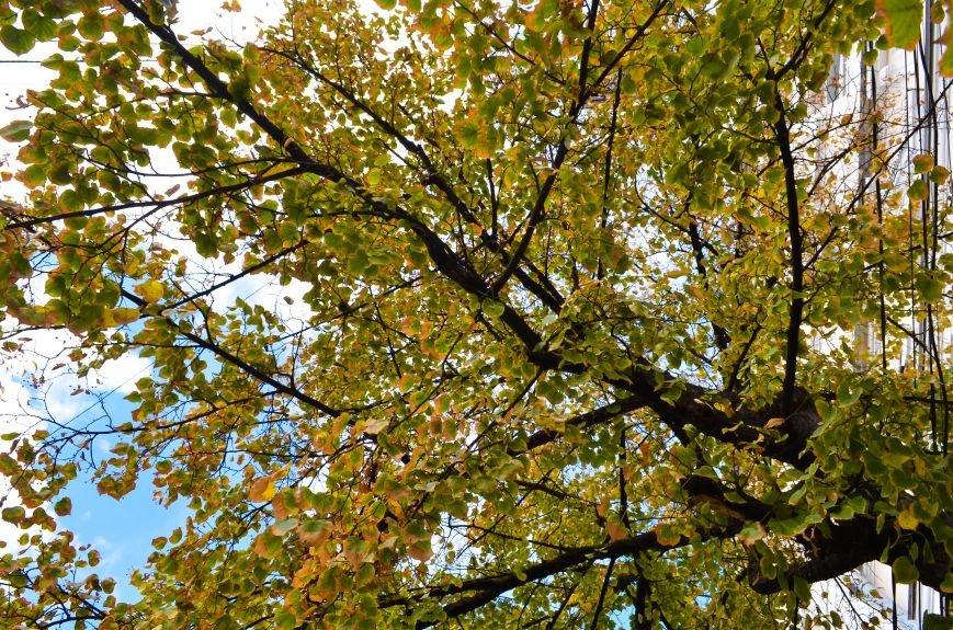 Осенние деревья в крымской столице (ФОТО), фото-6