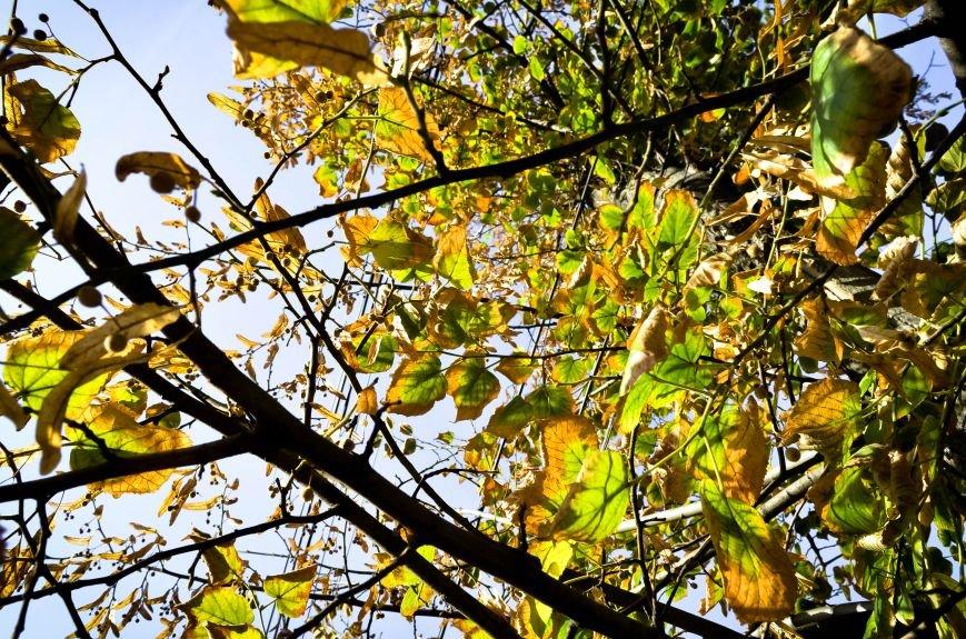Осенние деревья в крымской столице (ФОТО), фото-3