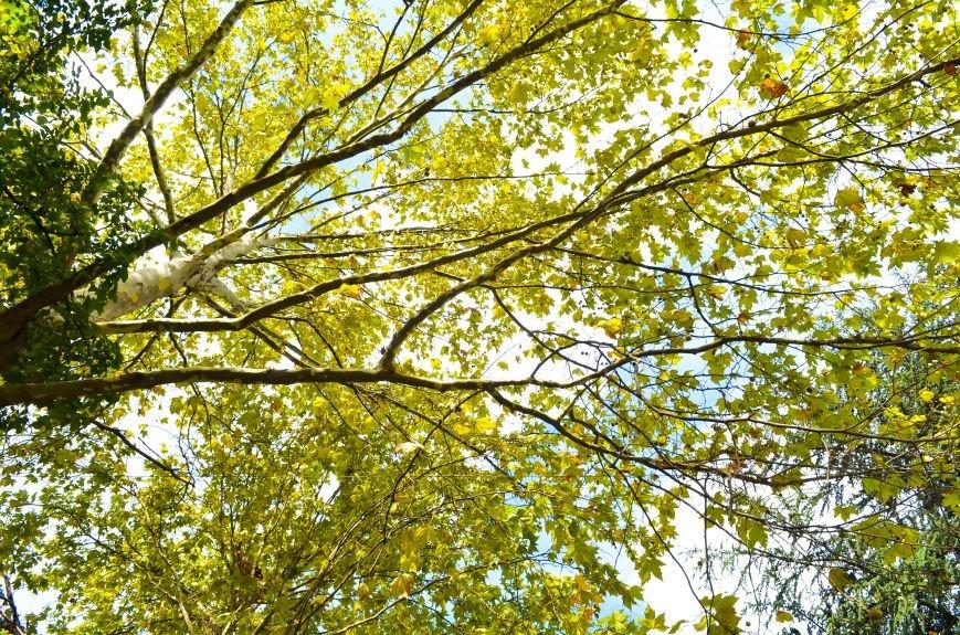 Осенние деревья в крымской столице (ФОТО), фото-7