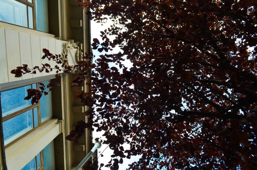 Осенние деревья в крымской столице (ФОТО), фото-5