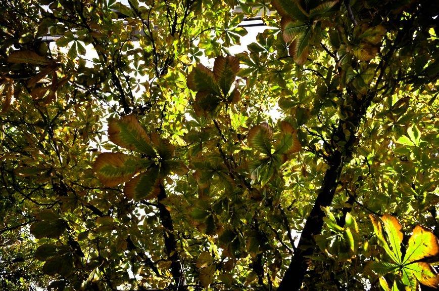 Осенние деревья в крымской столице (ФОТО), фото-1