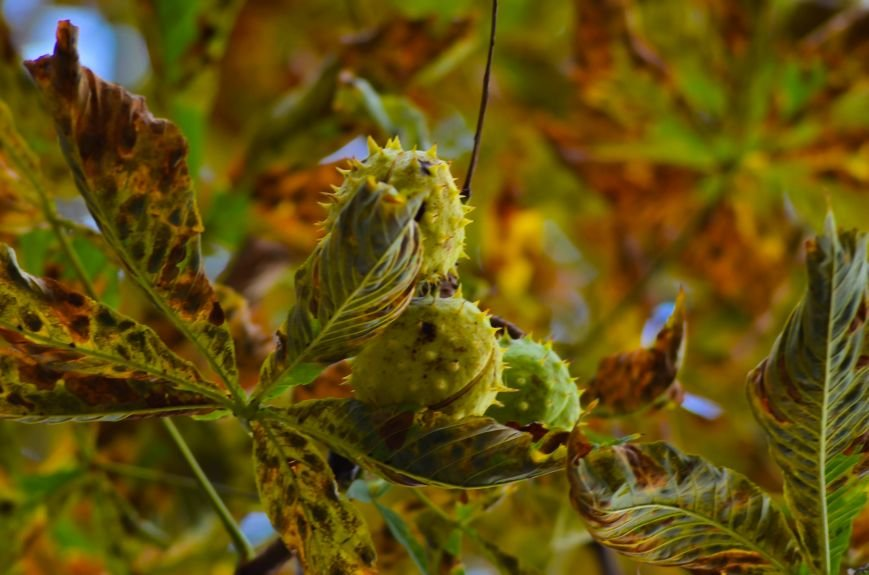 Осенние деревья в крымской столице (ФОТО), фото-12