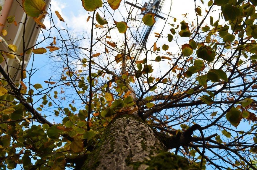 Осенние деревья в крымской столице (ФОТО), фото-4