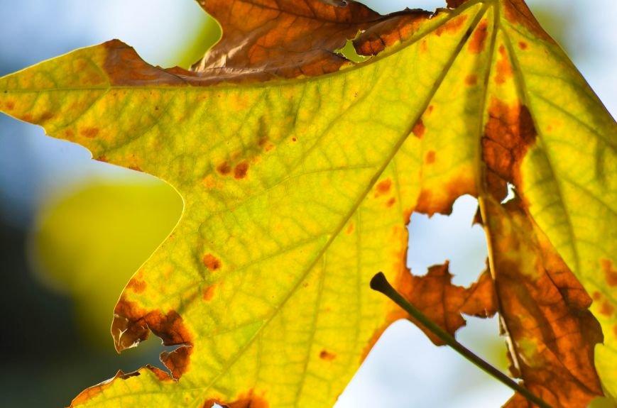 Осенние деревья в крымской столице (ФОТО), фото-15