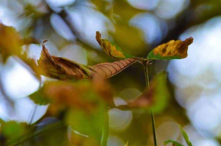 Осенние деревья в крымской столице (ФОТО), фото-13