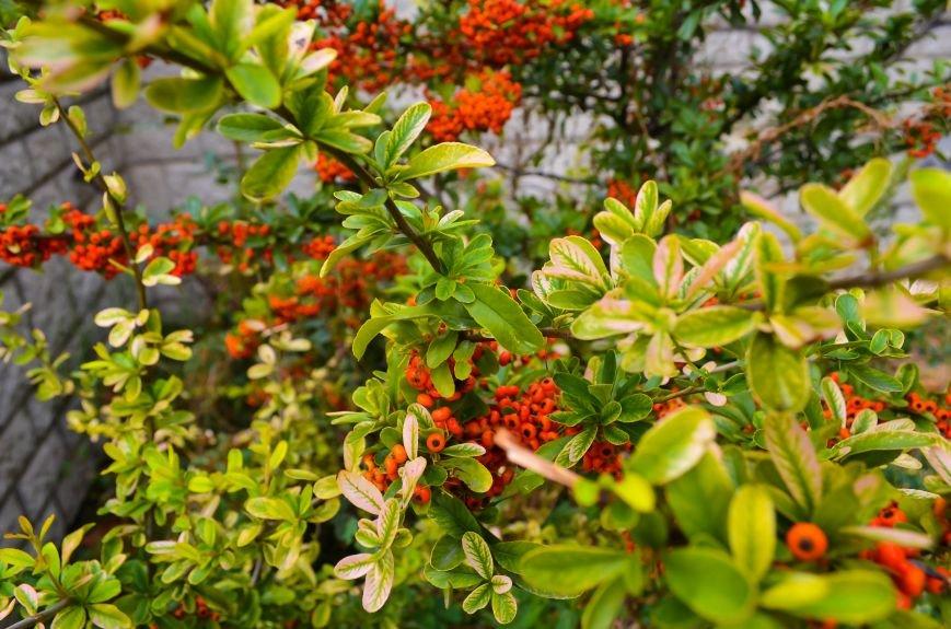 Осенние деревья в крымской столице (ФОТО), фото-8