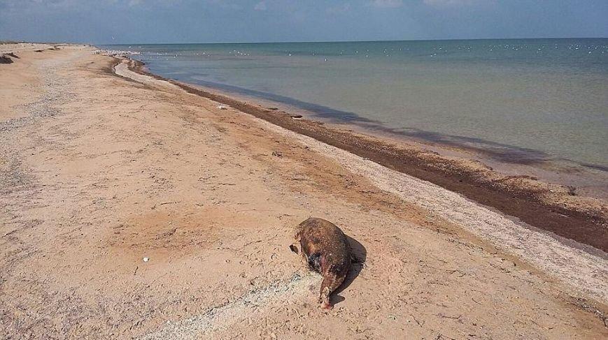 В Крыму на берег выбросило более полсотни дельфинов, убитых украинскими браконьерами (ФОТО 18+), фото-6