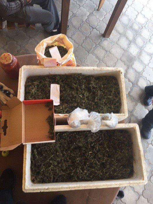 В Краматорске обнаружили плантацию марихуаны, фото-3