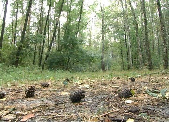 На Полтавщине сбежавшие из детдома дети 4 дня прятались в лесу, ели печеную картошку и грелись у костра, фото-1