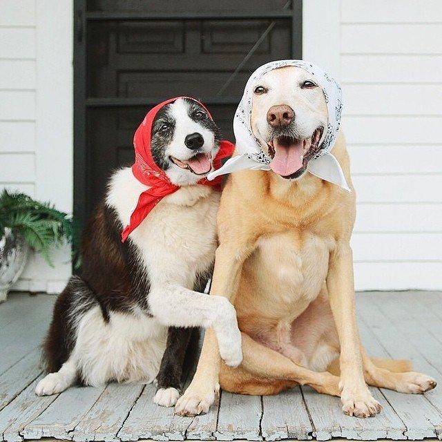 Пёс-Барбос и Фотокросс, фото-5