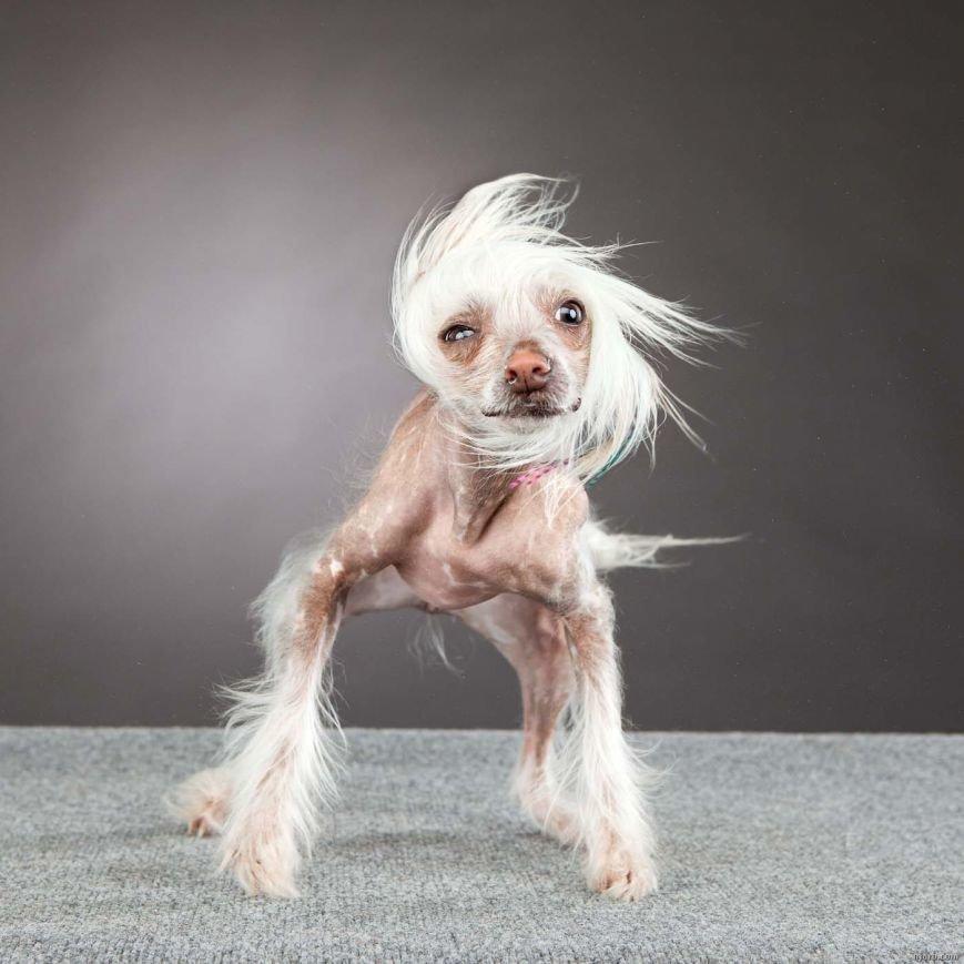 Пёс-Барбос и Фотокросс, фото-2