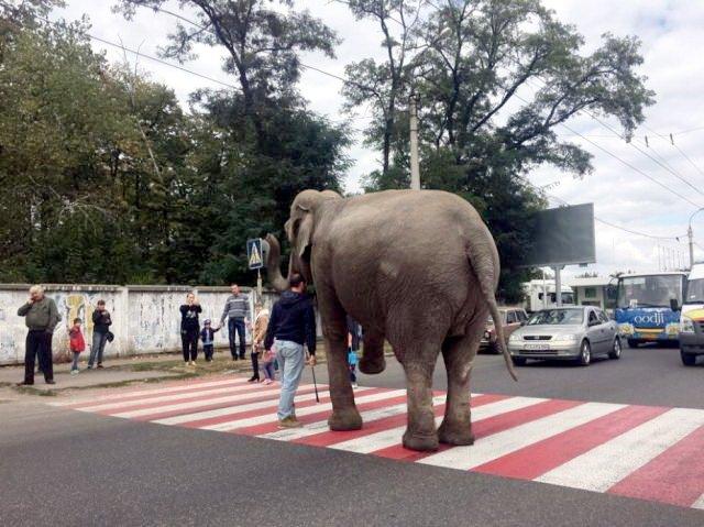 Слон-1