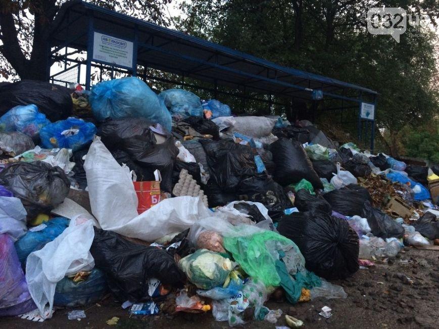 Львів продовжує потопати у смітті: фоторепортаж, фото-6