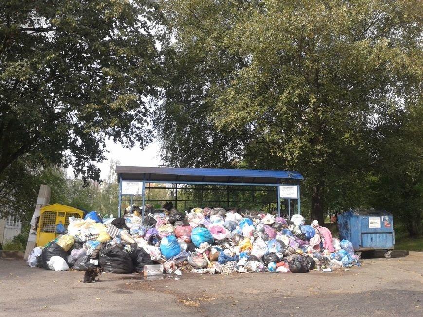 Львів продовжує потопати у смітті: фоторепортаж, фото-2