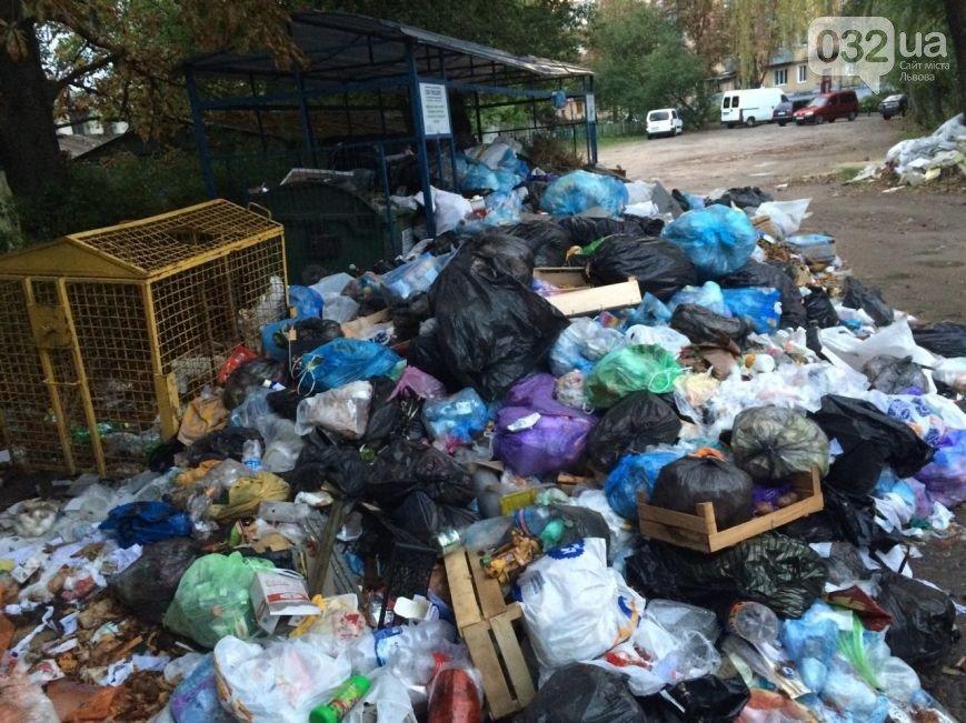 Львів продовжує потопати у смітті: фоторепортаж, фото-5