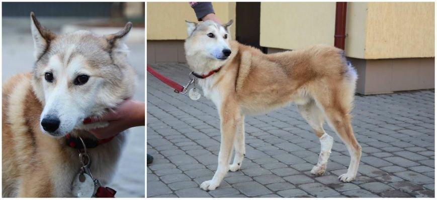 Собаки-герої з ЛКП «Лев»: 8 тварин з непростими історіями, що шукають дім, фото-2