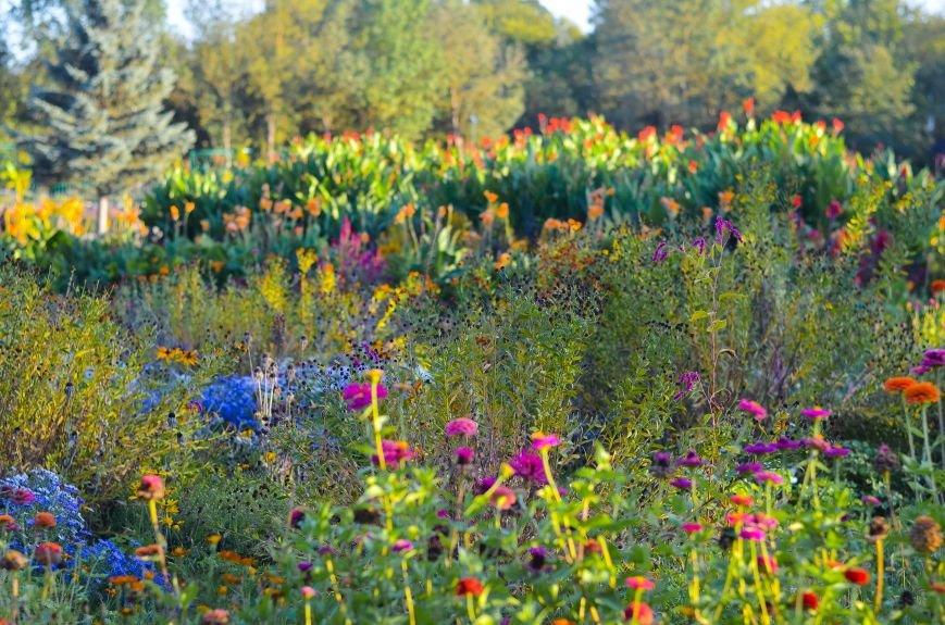 Осенний ботанический сад им. Н.В. Багрова (ФОТО), фото-7
