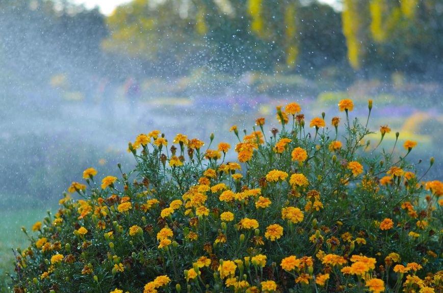 Осенний ботанический сад им. Н.В. Багрова (ФОТО), фото-12