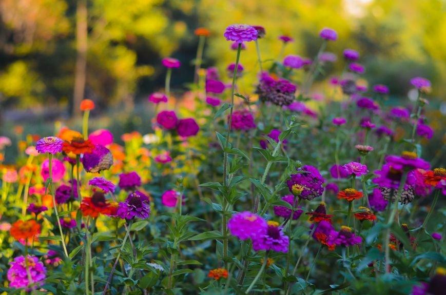 Осенний ботанический сад им. Н.В. Багрова (ФОТО), фото-5