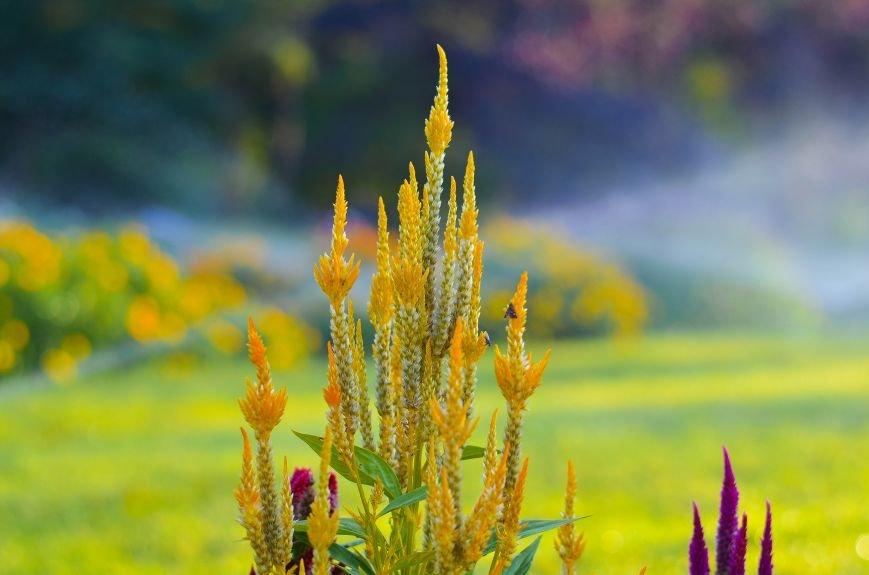 Осенний ботанический сад им. Н.В. Багрова (ФОТО), фото-10