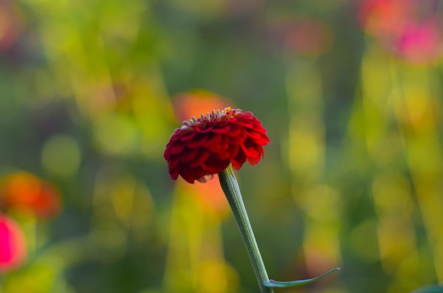 Осенний ботанический сад им. Н.В. Багрова (ФОТО), фото-6