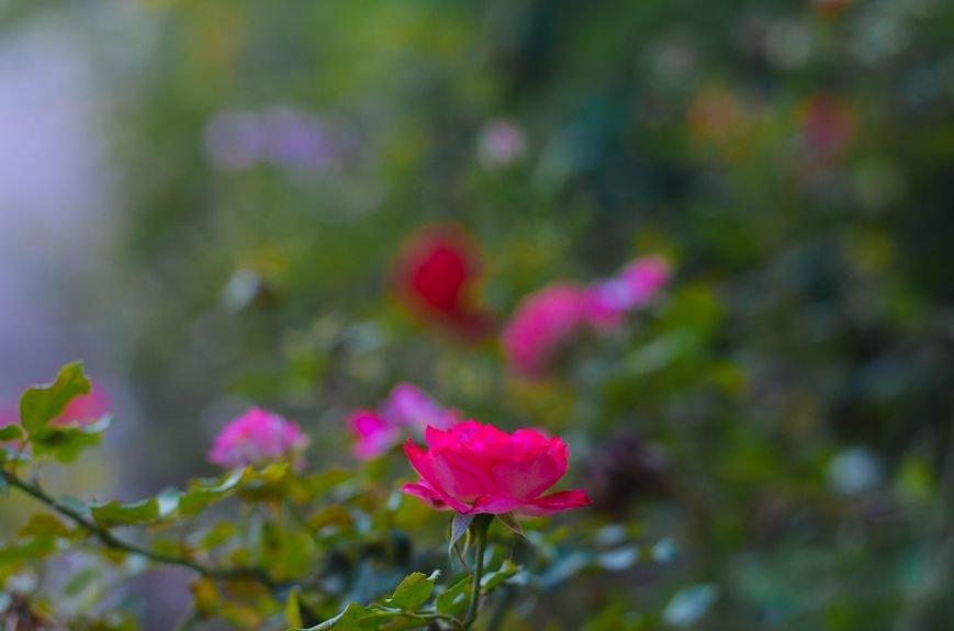 Осенний ботанический сад им. Н.В. Багрова (ФОТО), фото-15