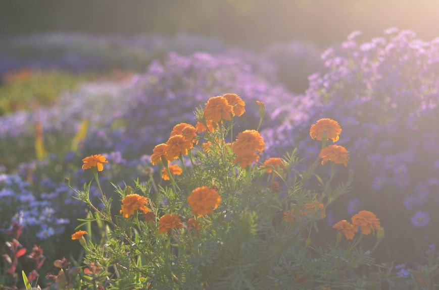 Осенний ботанический сад им. Н.В. Багрова (ФОТО), фото-9
