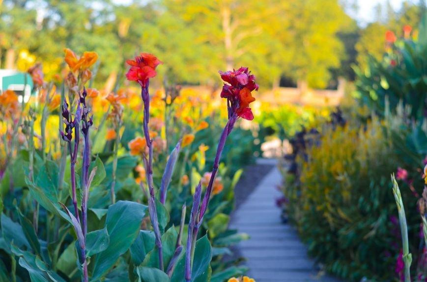 Осенний ботанический сад им. Н.В. Багрова (ФОТО), фото-8