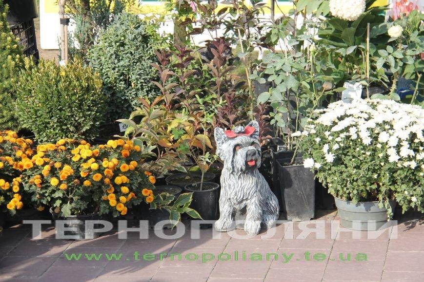 У Тернополі презентували «Найбільшу книгу з квітів» (фото), фото-2