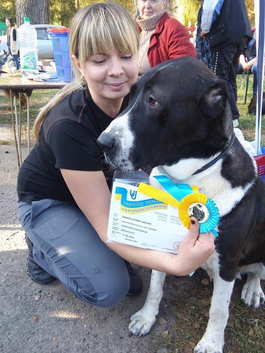 На сумской областной выставке собак организаторы определили 100 победителей (ФОТООТЧЕТ), фото-1