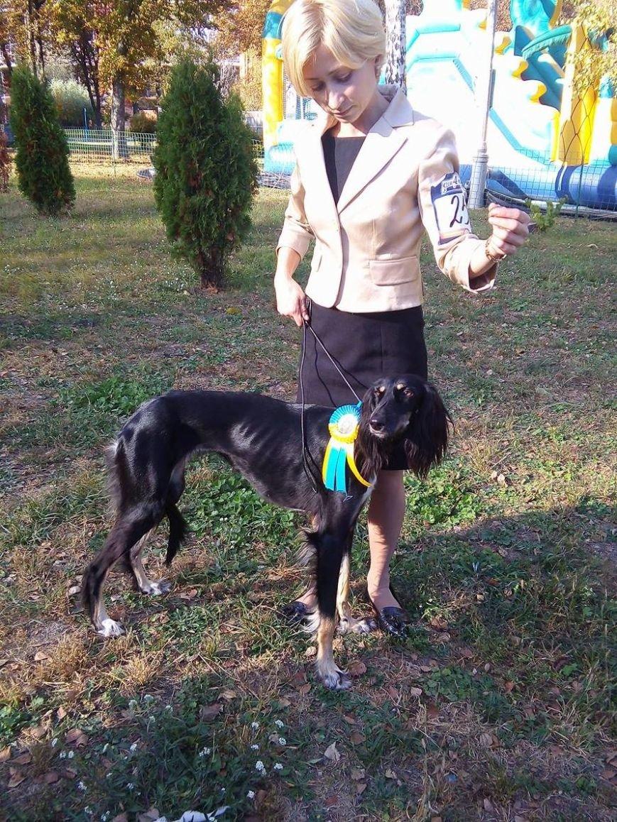 На сумской областной выставке собак организаторы определили 100 победителей (ФОТООТЧЕТ), фото-5