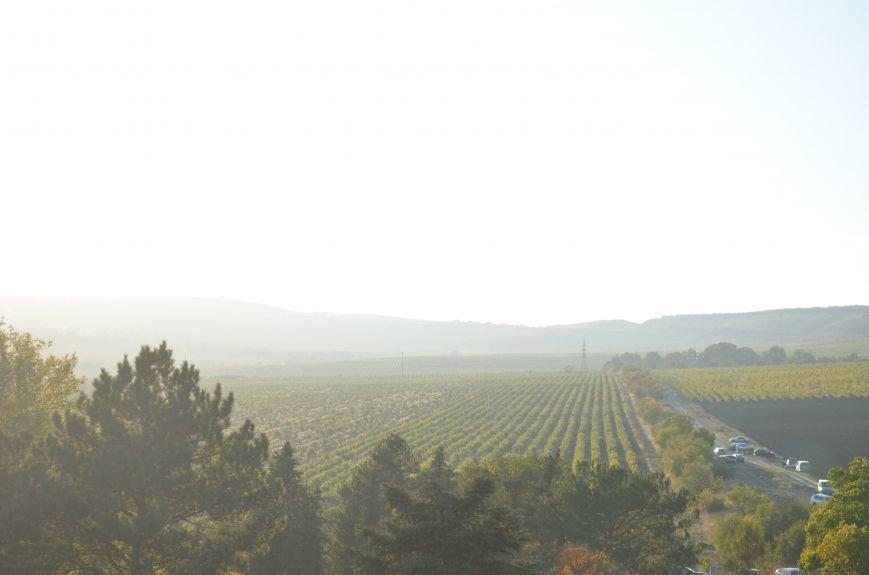 В Крыму прошел праздник урожая и молодого вина (ФОТО), фото-8