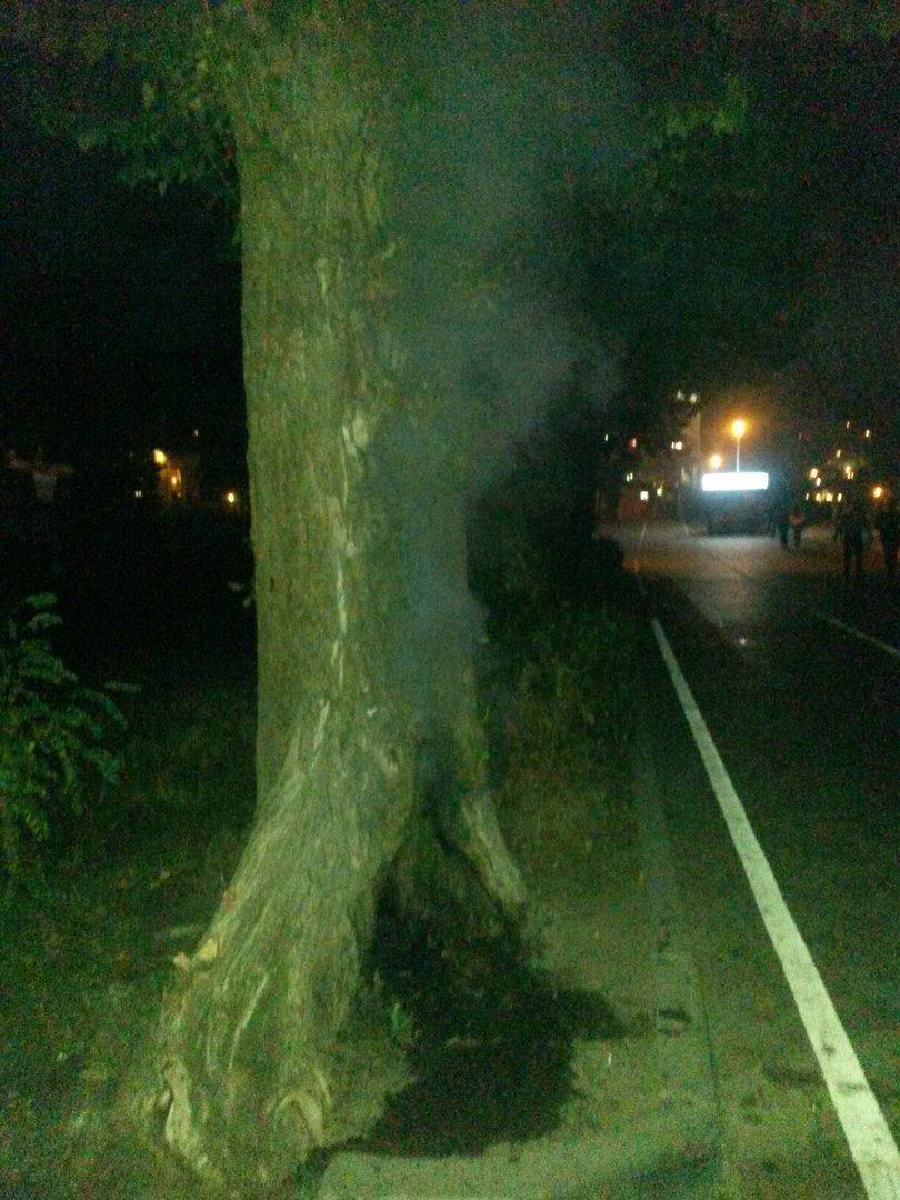 Біля Тернопільського озера підпалили дерево (Фото), фото-1