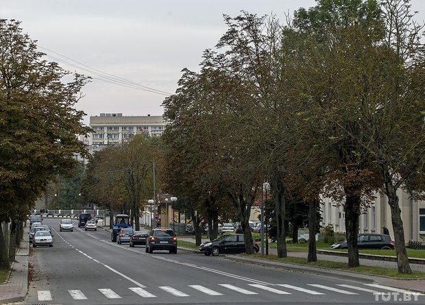 В Гродно в начале октября снова зацвели каштаны, фото-2