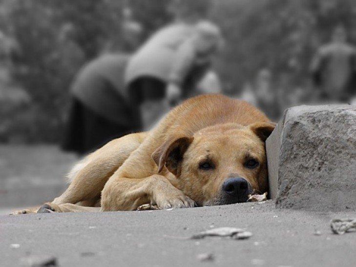 Какое будущее ждет бродячих собак в Мариуполе, фото-2