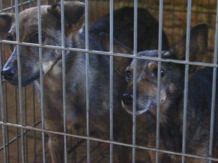 Какое будущее ждет бродячих собак в Мариуполе, фото-1