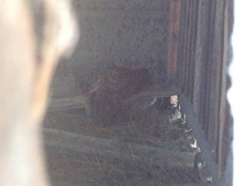 Из мариупольского зоопарка сбежал леопард (Дополнено, ФОТО, ВИДЕО), фото-2