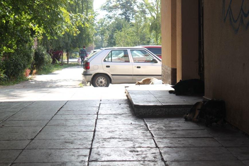 Ужгородський вокзал: атмосфера «Трьох горбів», стихійна торгівля та бродячі пси, фото-8